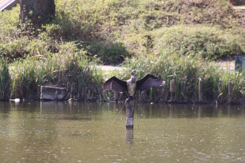 """Heute am """"Lake Seiler""""  - Seite 3 Img_6820"""