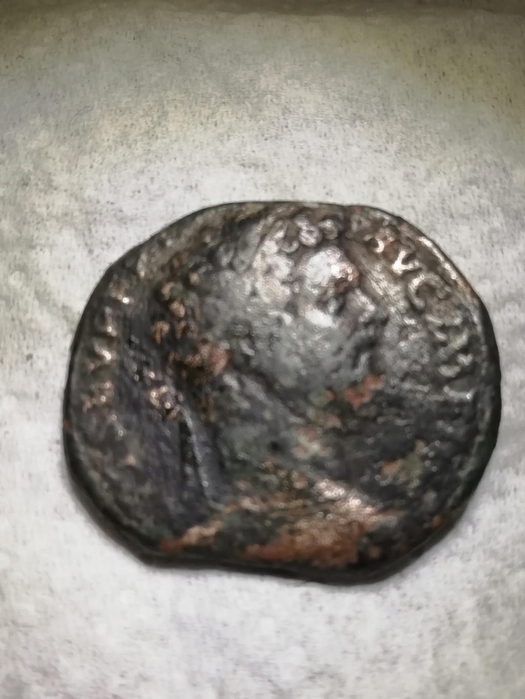romaine Img_2028