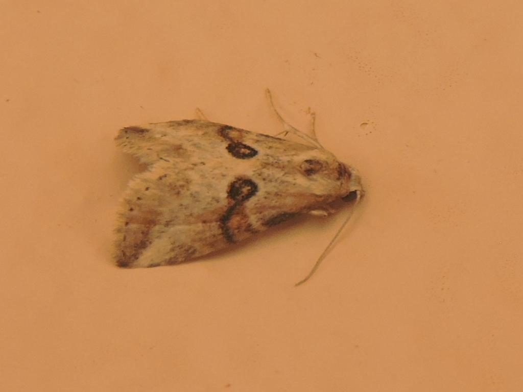 papillon inconnu Rscn5814