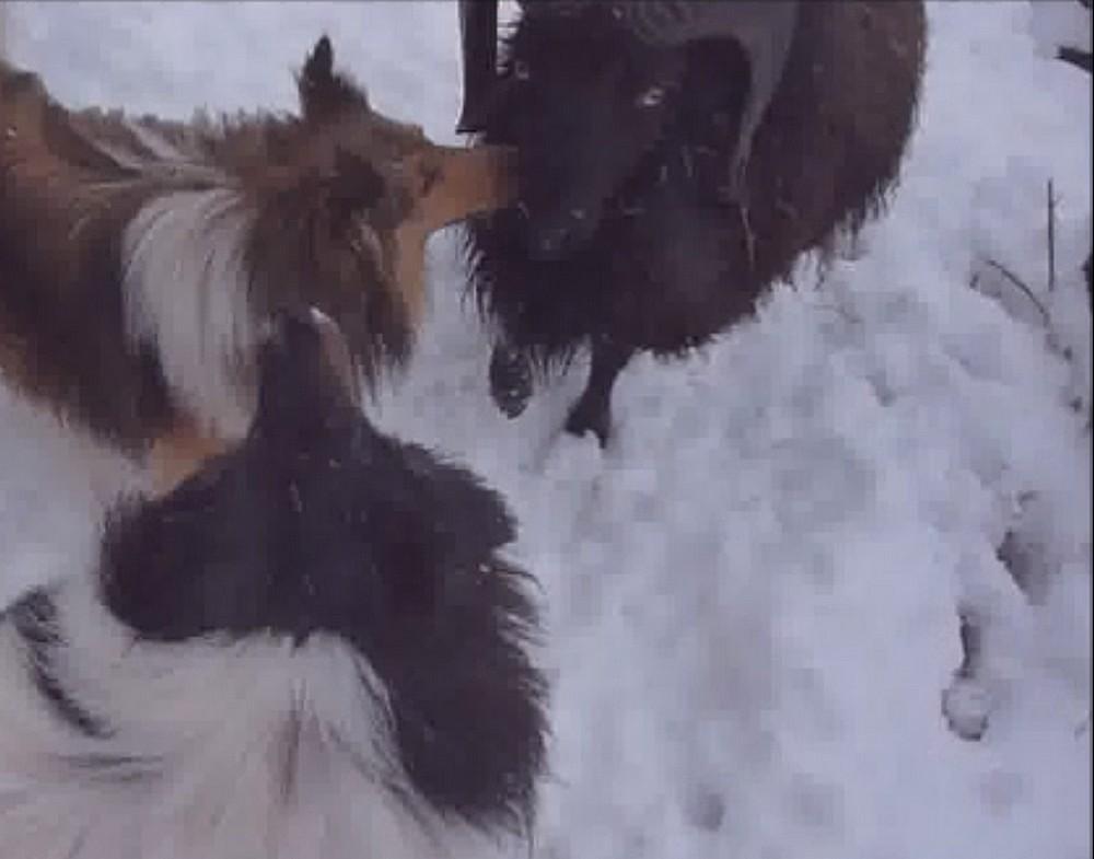 2019: Remi adore la neige! Bisous10