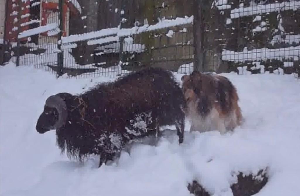 2019: Remi adore la neige! Curios10