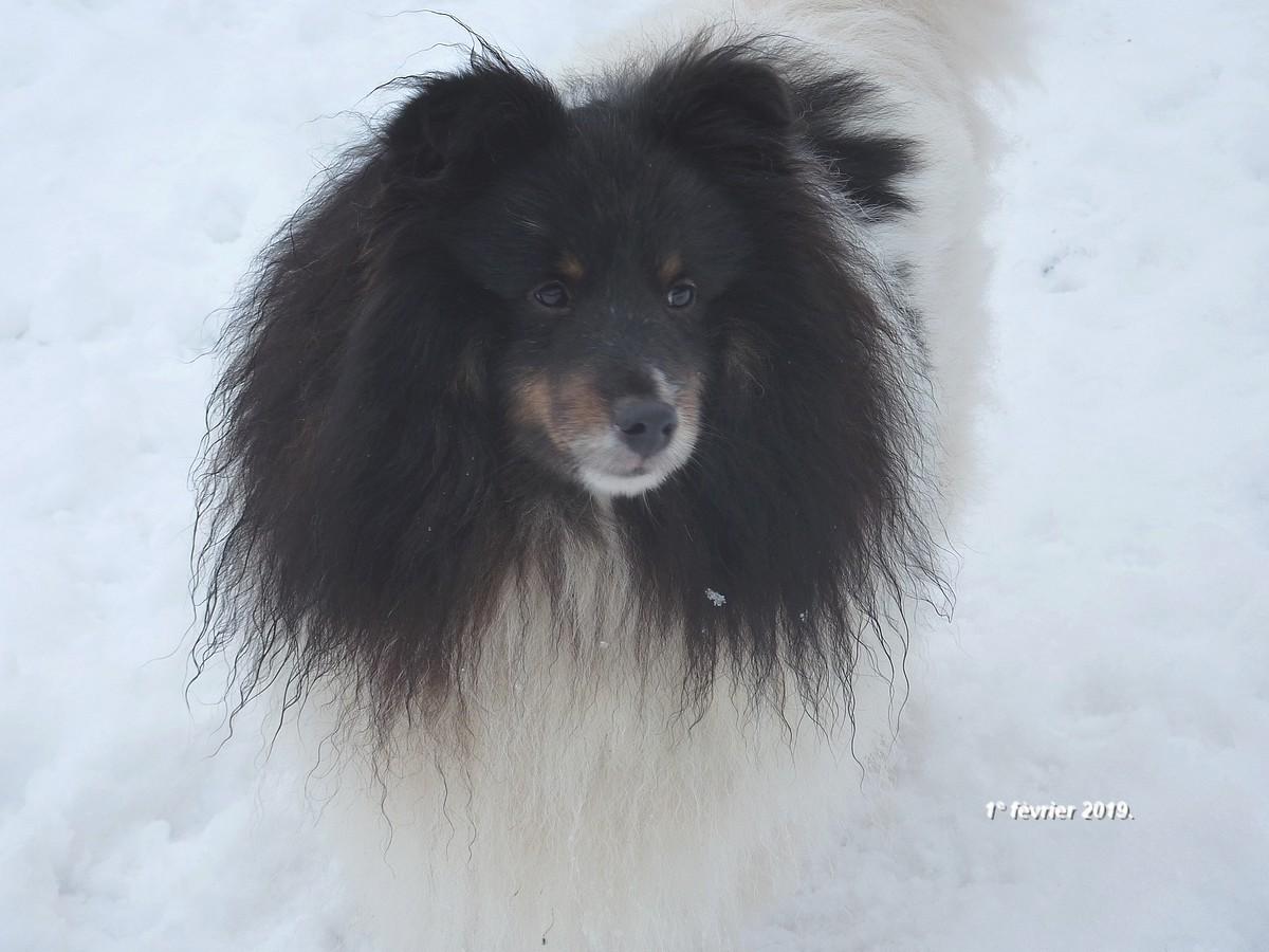2019: Remi adore la neige! E10