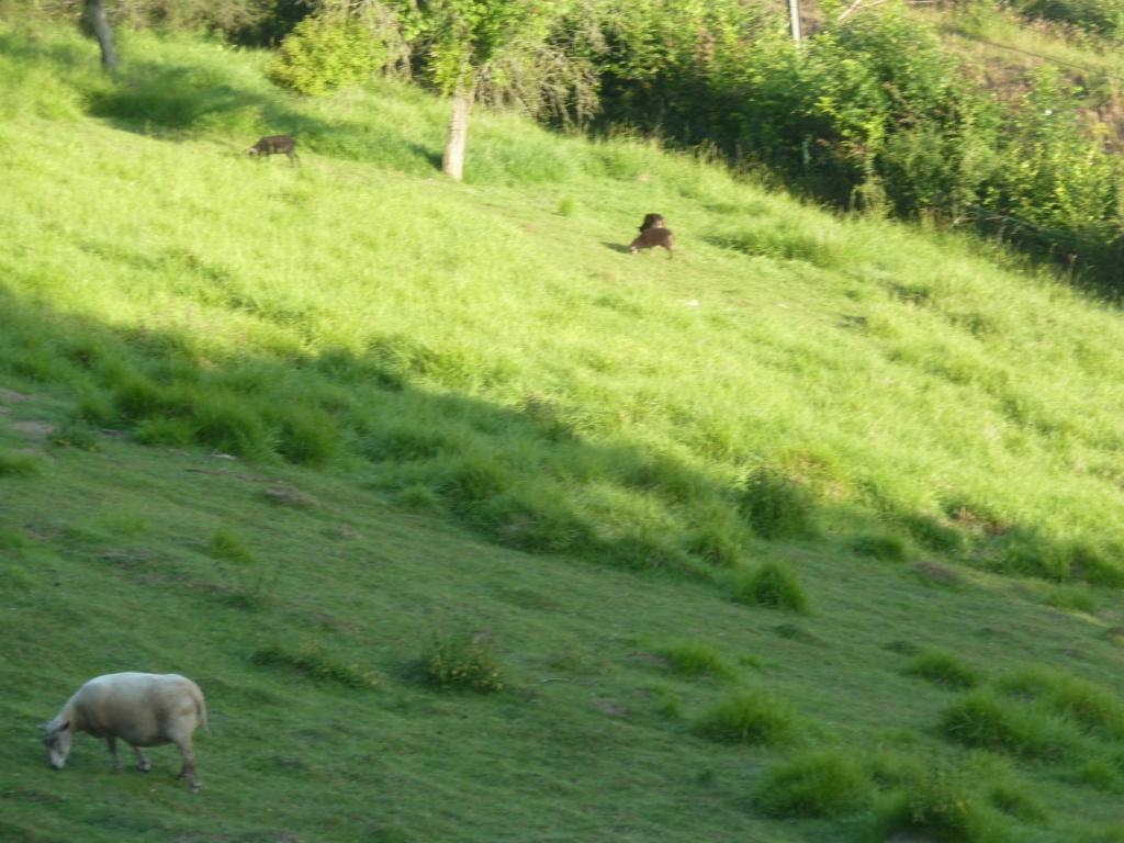 2018, dans ma prairie. Mouton10