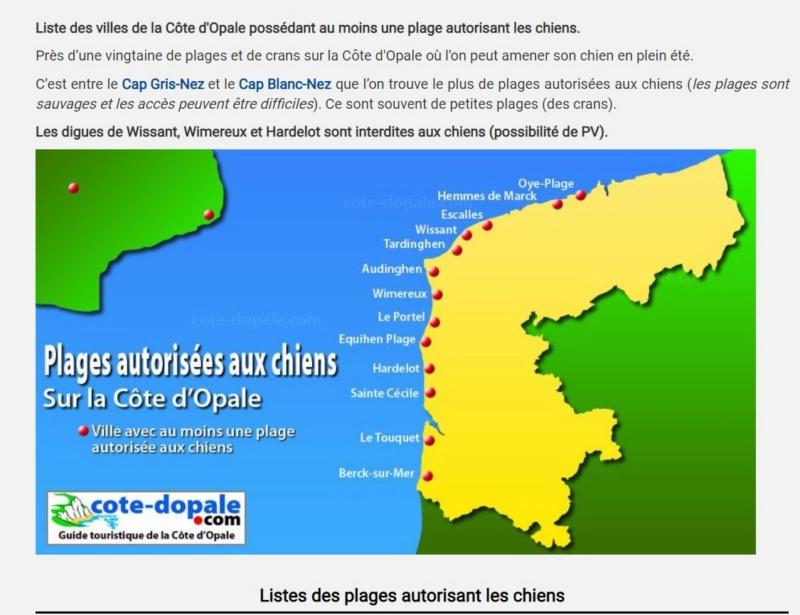 Plages autorisées aux chiens à la côte d'Opale et en Belgique. Plafes10