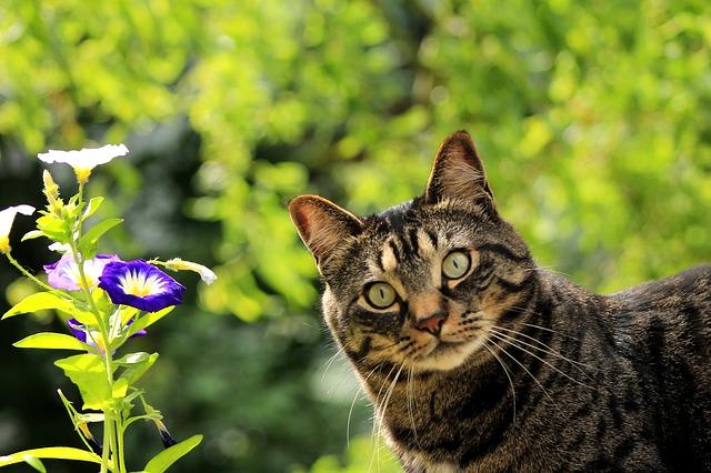 =^_^= Котики =^_^= - Страница 14 Cat-1710