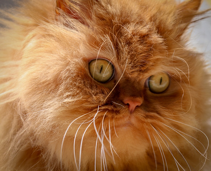 =^_^= Котики =^_^= - Страница 12 Cat-4011