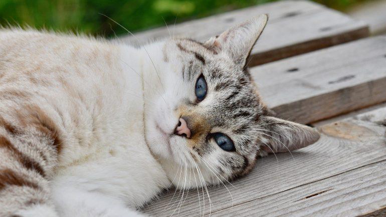 =^_^= Котики =^_^= - Страница 14 Cat-4410