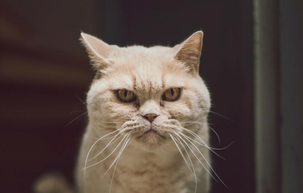 =^_^= Котики =^_^= - Страница 11 Cat-gl10