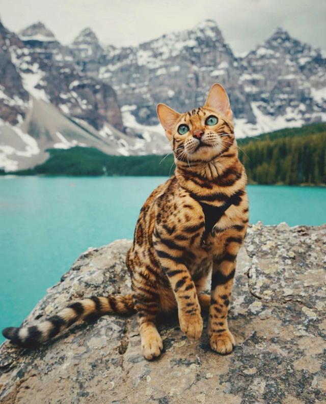 =^_^= Котики =^_^= - Страница 14 Cat-la11