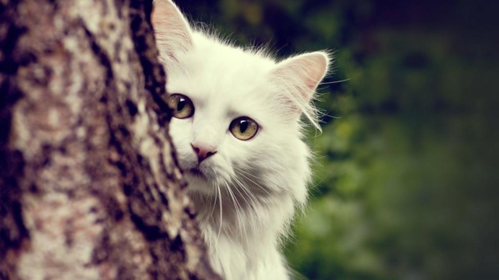 =^_^= Котики =^_^= - Страница 5 Cat-wh10