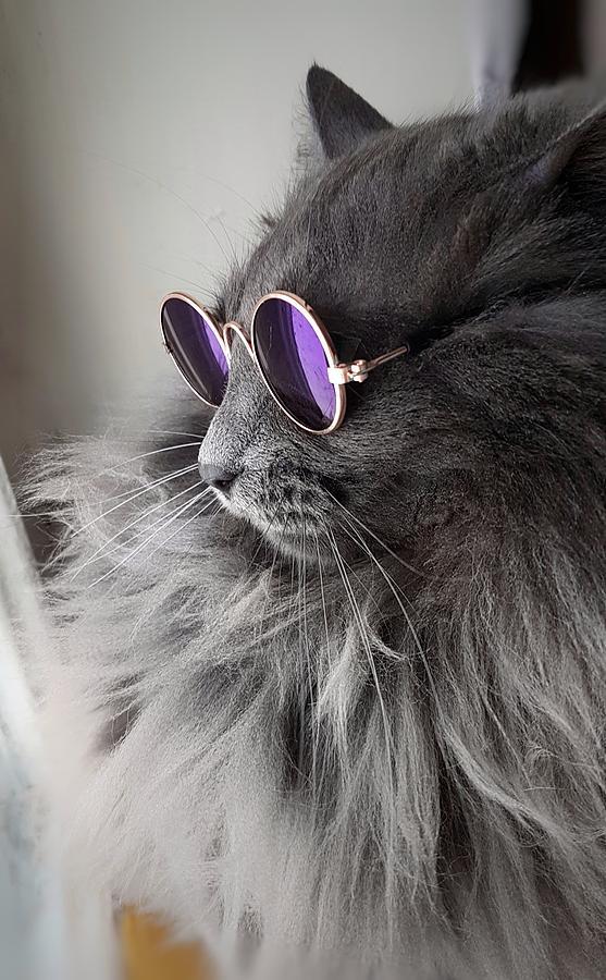 =^_^= Котики =^_^= - Страница 13 Cat-wi12