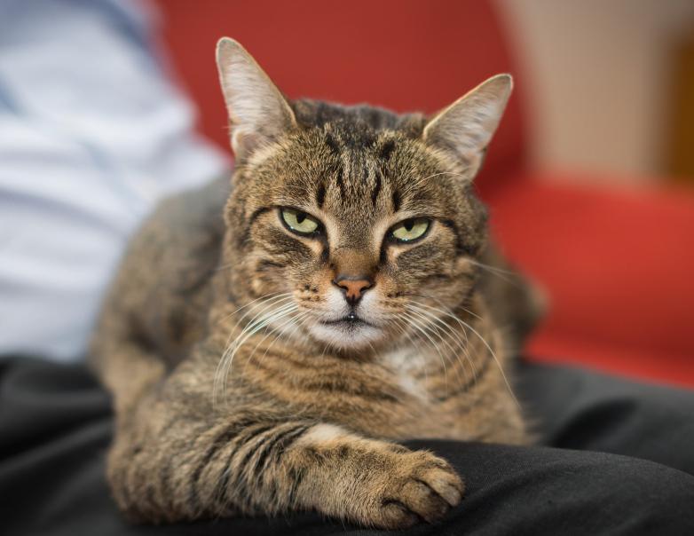 =^_^= Котики =^_^= Cat10