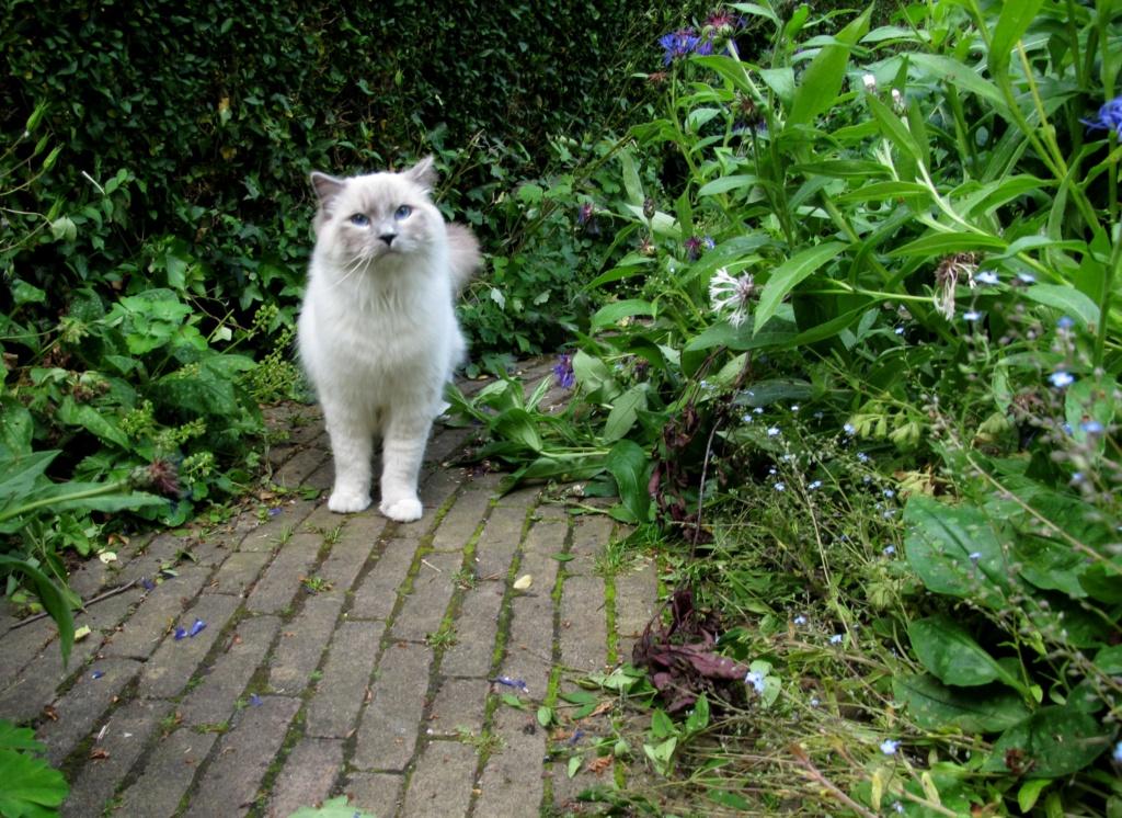=^_^= Котики =^_^= - Страница 13 Cat_in10