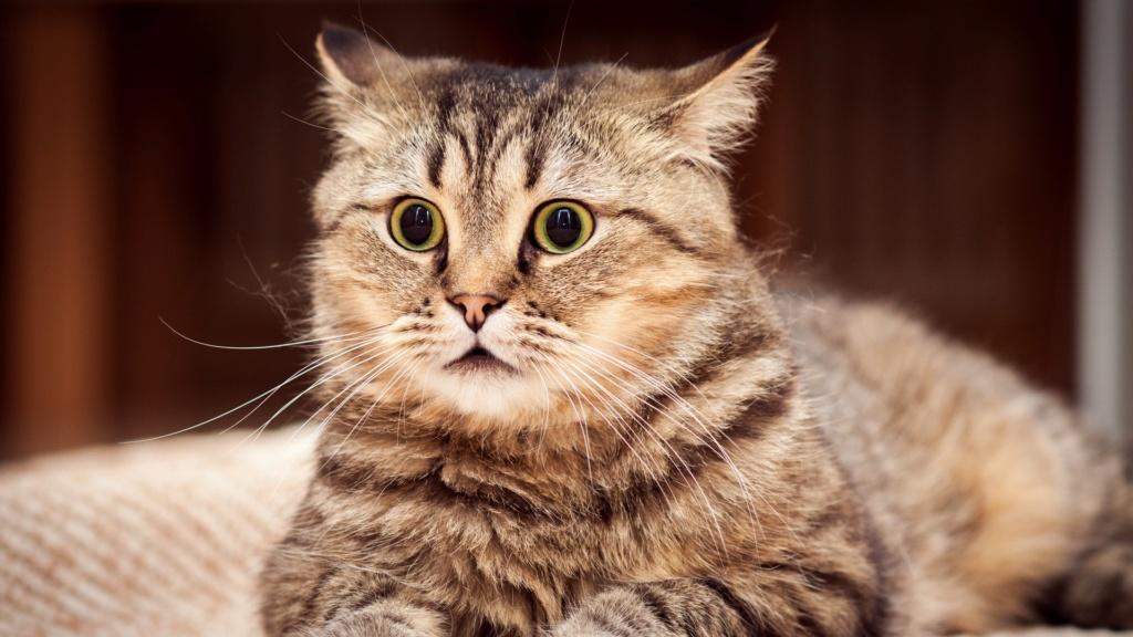 =^_^= Котики =^_^= - Страница 5 Cat_su10