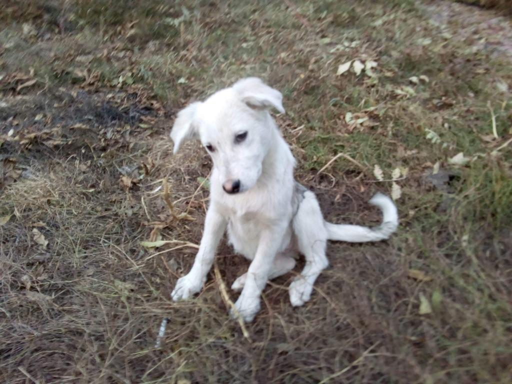 Alaska - femelle - Târgu Frumos - réservé adoption (68) 14204e10