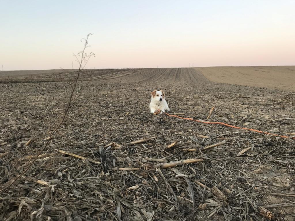 Dove - femelle - refuge d'Arad - adoptée (67) 2554c810