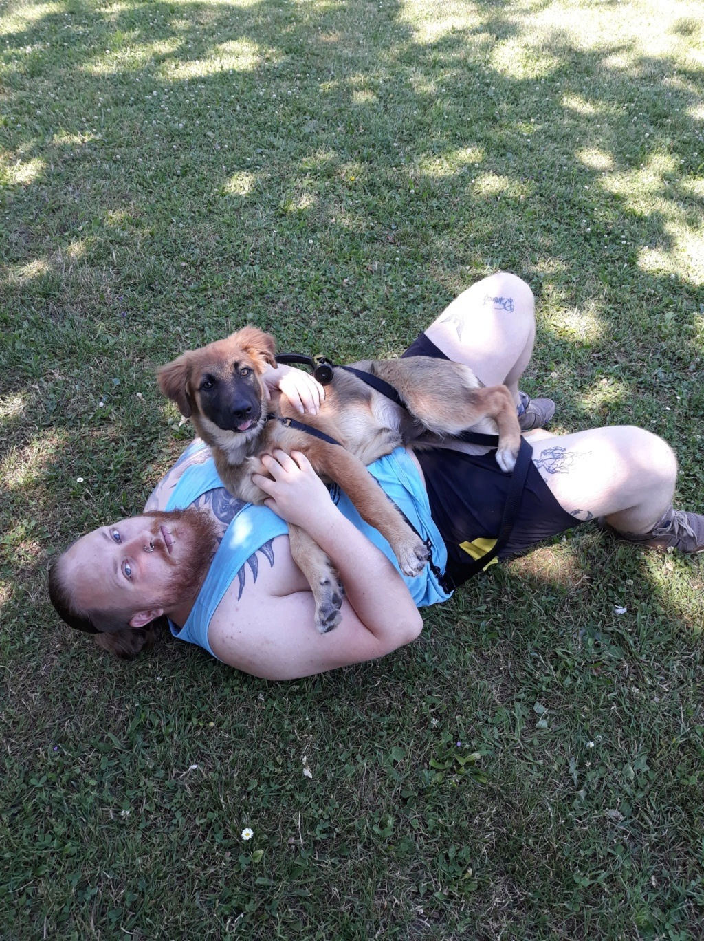 Ace (ex-Milano) - mâle - chez Andreea (Târgu Frumos) - réservée adoption (67) 36577210