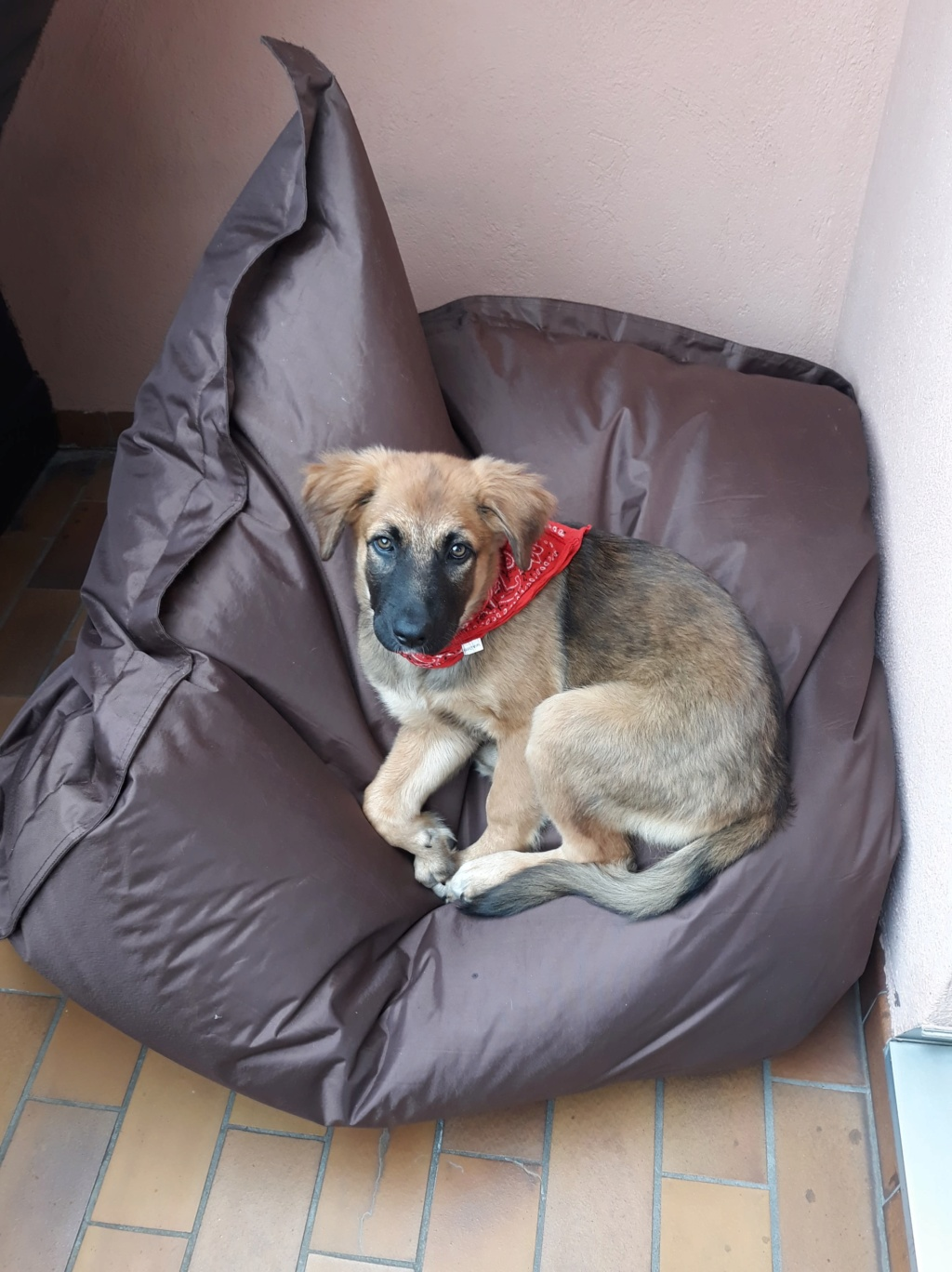 Ace (ex-Milano) - mâle - chez Andreea (Târgu Frumos) - réservée adoption (67) 36578810