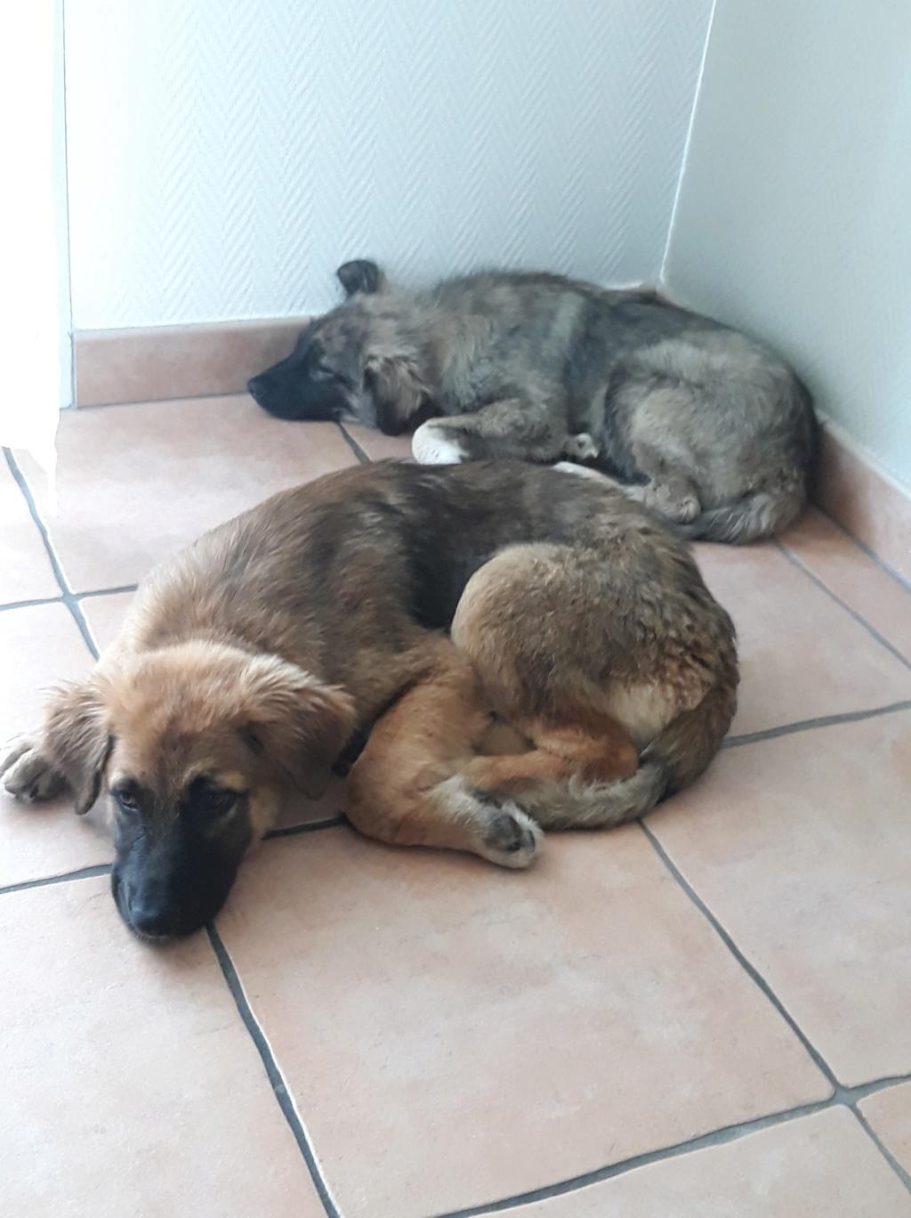 Ace (ex-Milano) - mâle - chez Andreea (Târgu Frumos) - réservée adoption (67) 36617911
