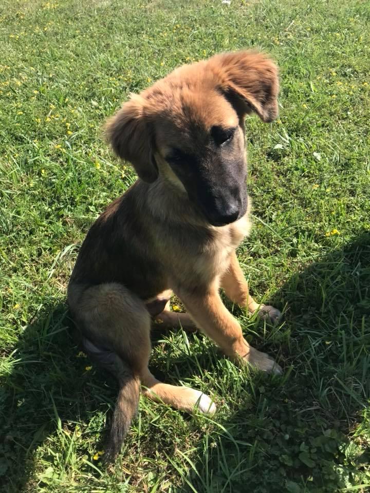 Ace (ex-Milano) - mâle - chez Andreea (Târgu Frumos) - réservée adoption (67) 36797010
