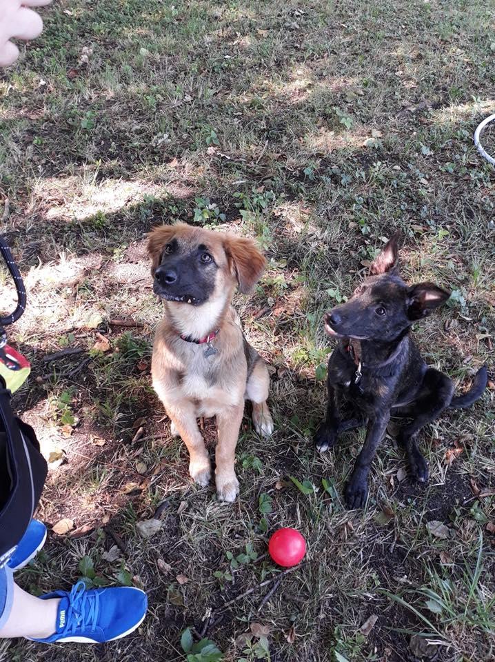 Cooky (ex-Newton) - mâle - Târgu Frumos - réservé adoption (67) 36841711