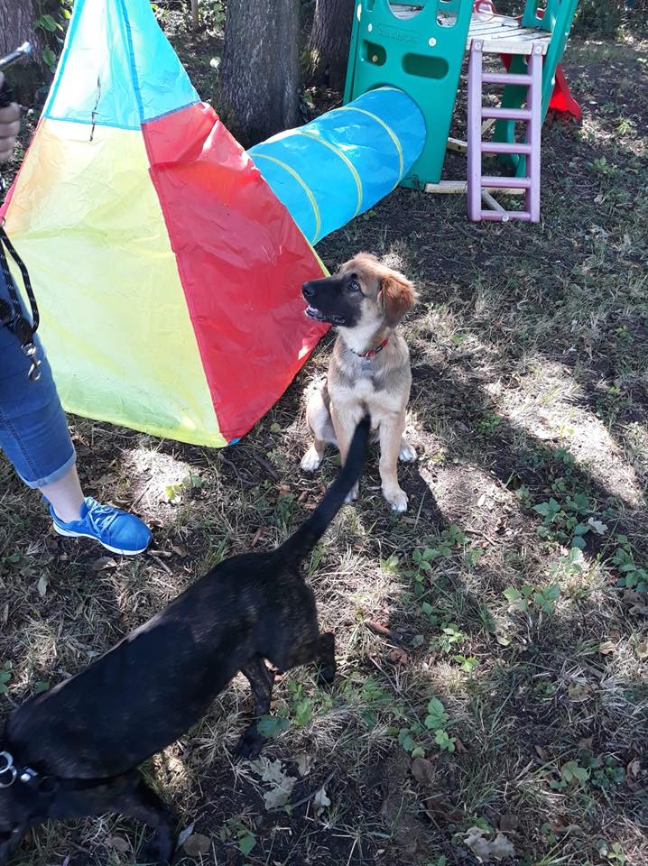 Ace (ex-Milano) - mâle - chez Andreea (Târgu Frumos) - réservée adoption (67) 36870010