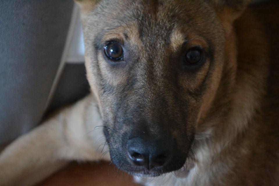 Narco - mâle - Târgu Frumos - réservé Adoption (27) 37073910