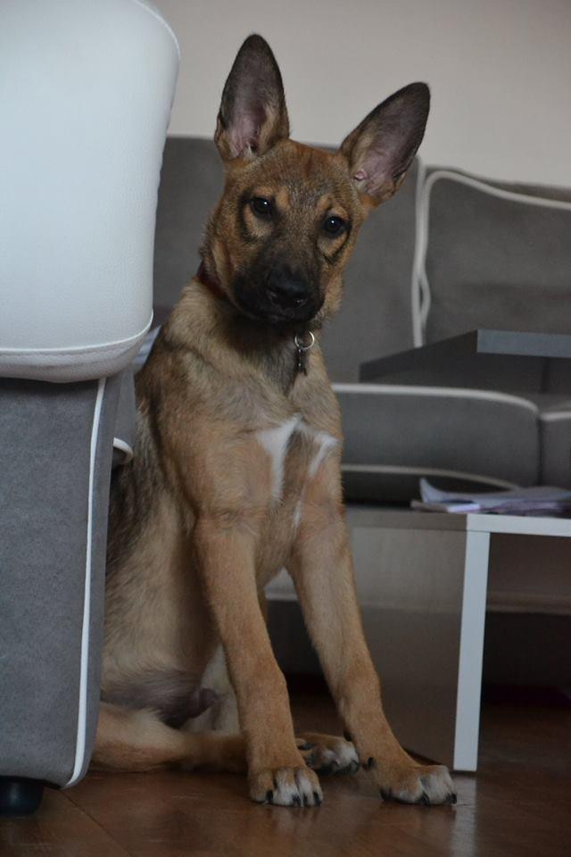 Narco - mâle - Târgu Frumos - réservé Adoption (27) 37156810
