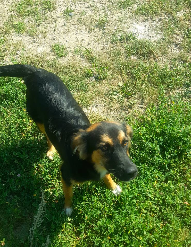 Galina - femelle -en FA à Târgu Frumos - réservée adoption (67)  39252910