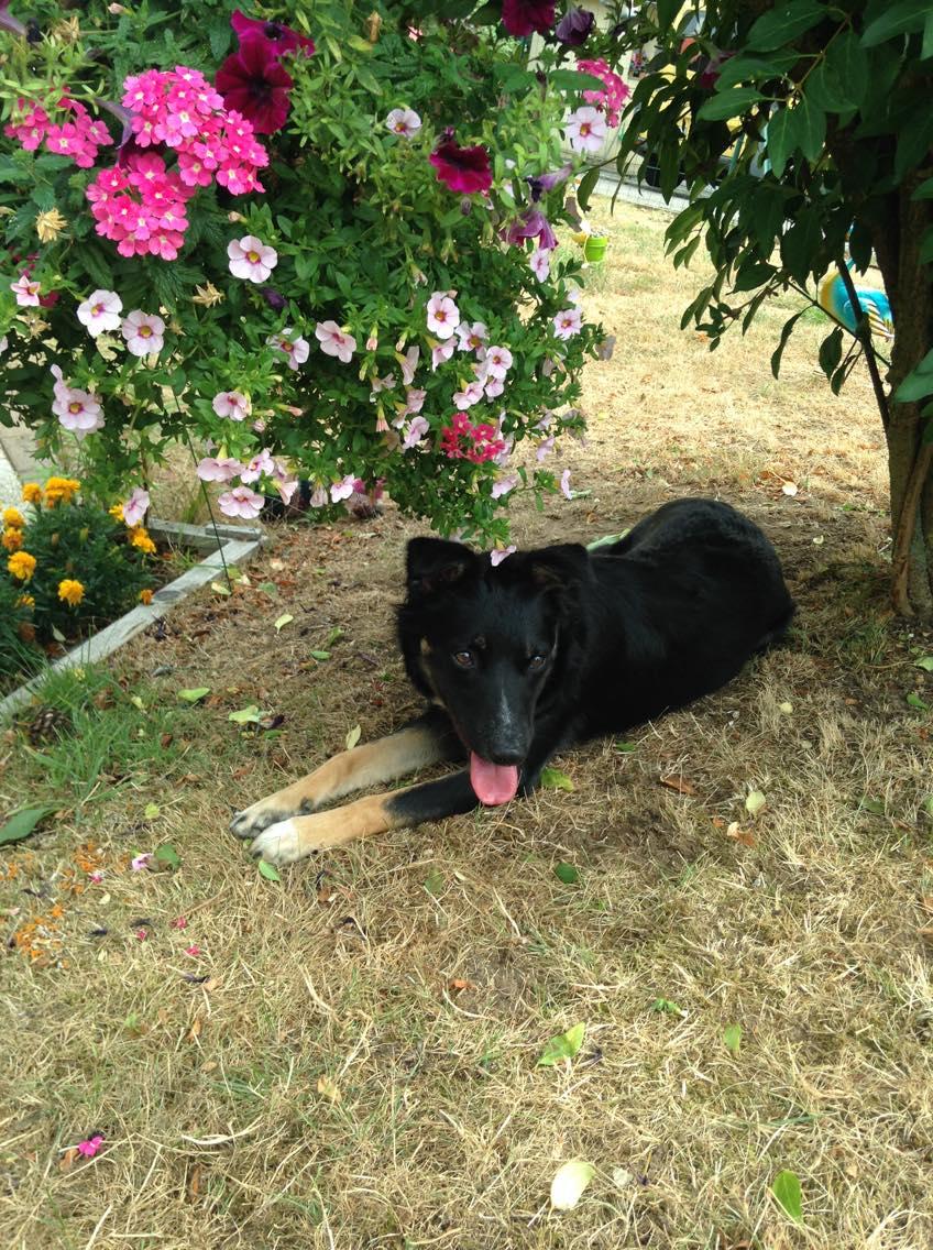 Nookie - femelle  - refuge de Târgu Frumos - Réservée adoption (67) 39332610