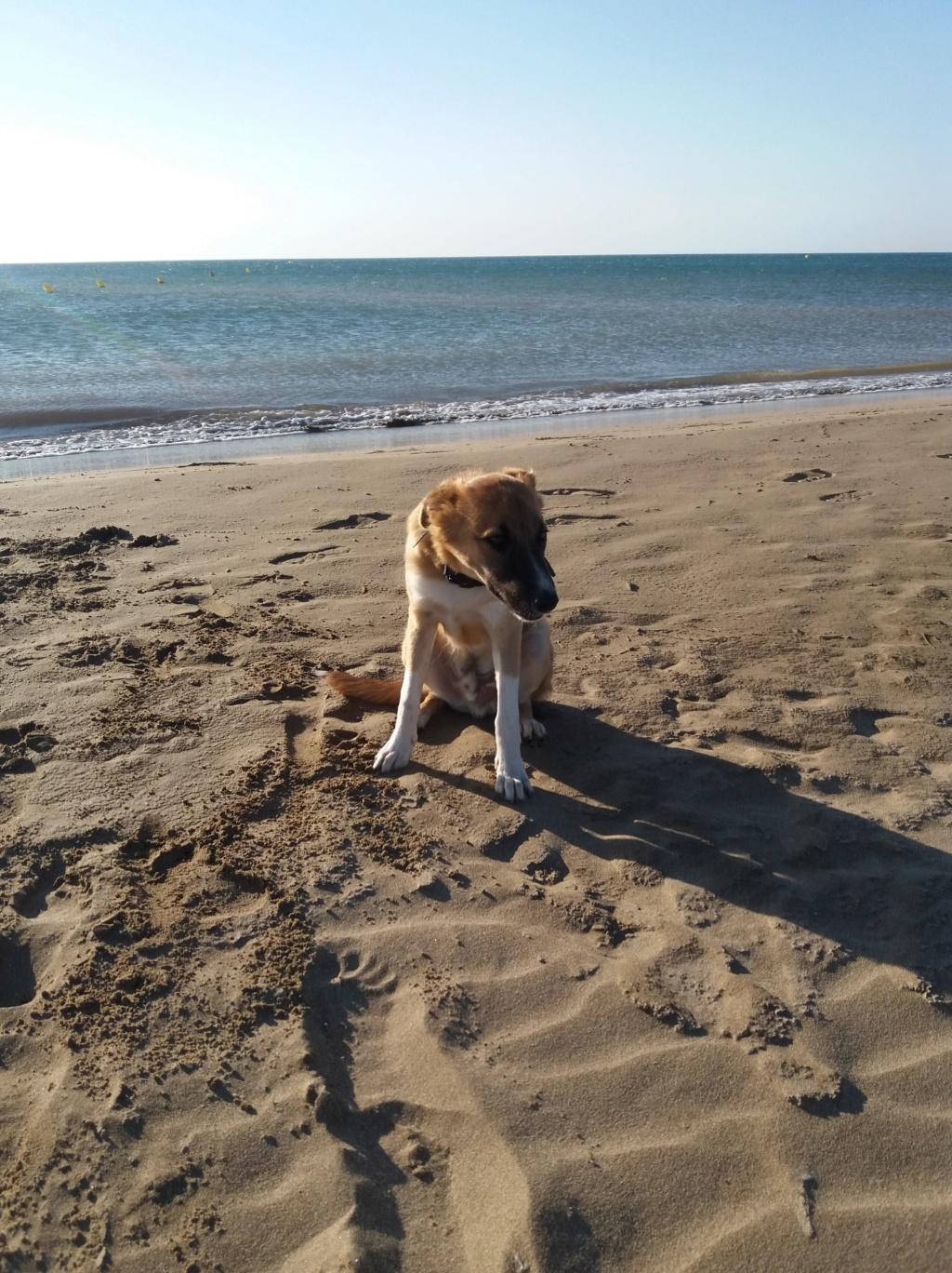 Athos - mâle - chez Andreea - Târgu Frumos - réservé adoption (68) 39700610