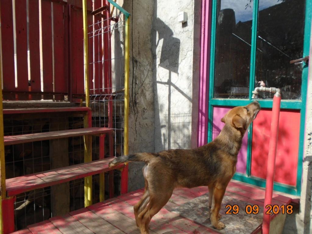 Zora - femelle - refuge de Arad - réservée adoption (67) 42701510