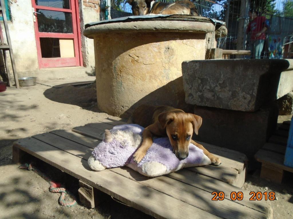 Zora - femelle - refuge de Arad - réservée adoption (67) 42758610