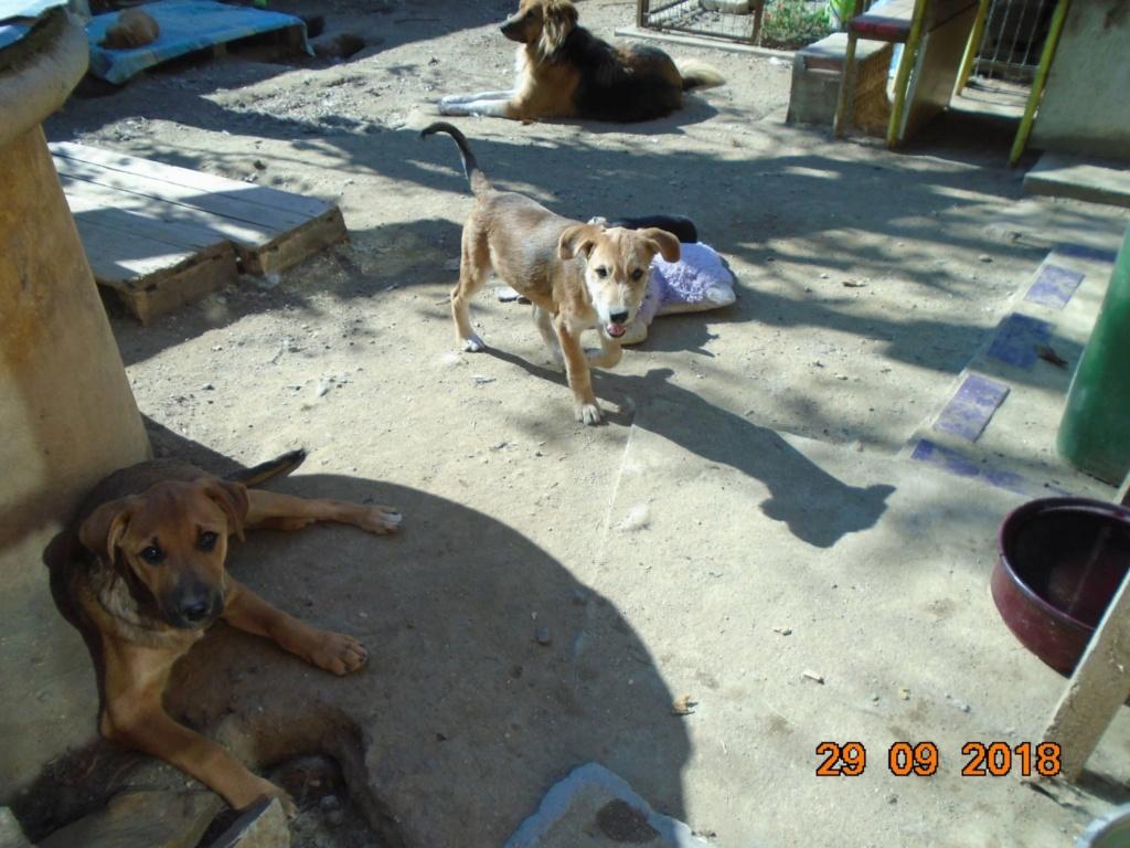 Zora - femelle - refuge de Arad - réservée adoption (67) 42766810