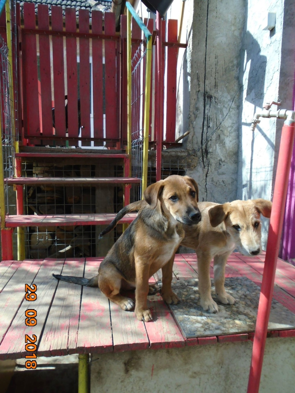 Zora - femelle - refuge de Arad - réservée adoption (67) 42772810