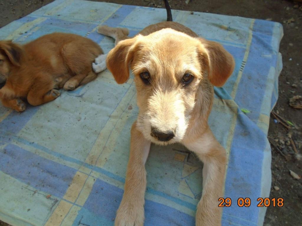 Chnapie (ex-Zina) - femelle - refuge d'Arad - réservée adoption (67) 42799410