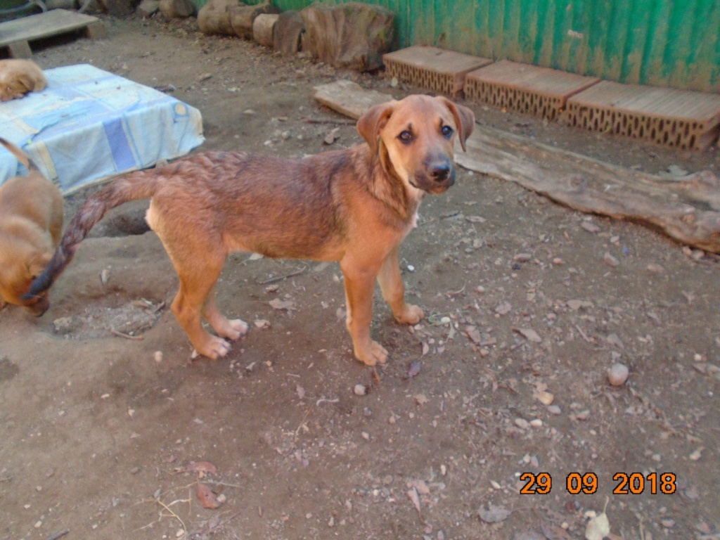 Zora - femelle - refuge de Arad - réservée adoption (67) 42804510