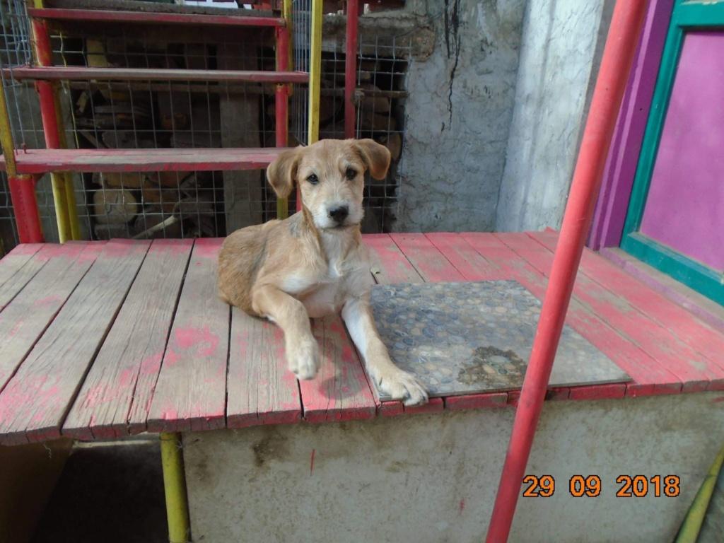 Chnapie (ex-Zina) - femelle - refuge d'Arad - réservée adoption (67) 42813410