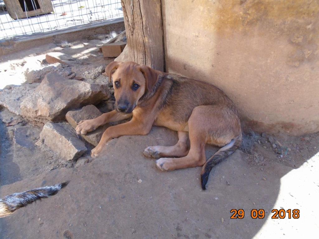 Zora - femelle - refuge de Arad - réservée adoption (67) 42836810