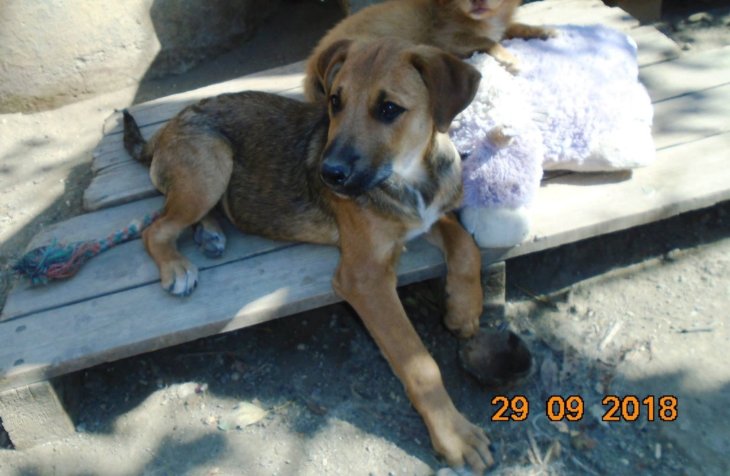Zora - femelle - refuge de Arad - réservée adoption (67) 42851610