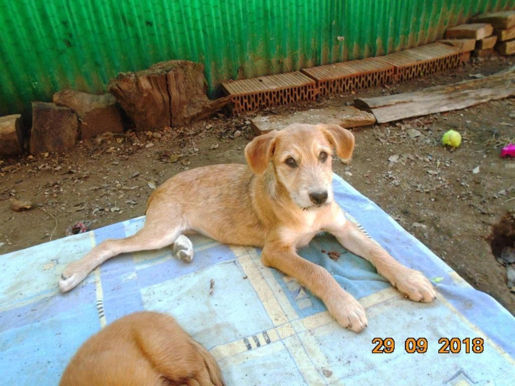 Chnapie (ex-Zina) - femelle - refuge d'Arad - réservée adoption (67) 42859810