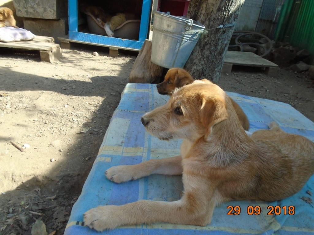Chnapie (ex-Zina) - femelle - refuge d'Arad - réservée adoption (67) 42933410