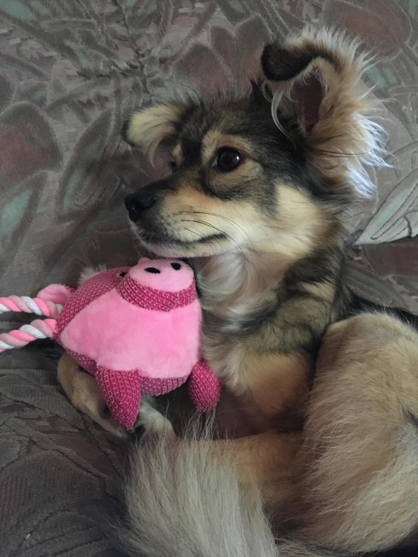 Hinouk - femelle - Târgu Frumos - réservée adoption (57) 44943210
