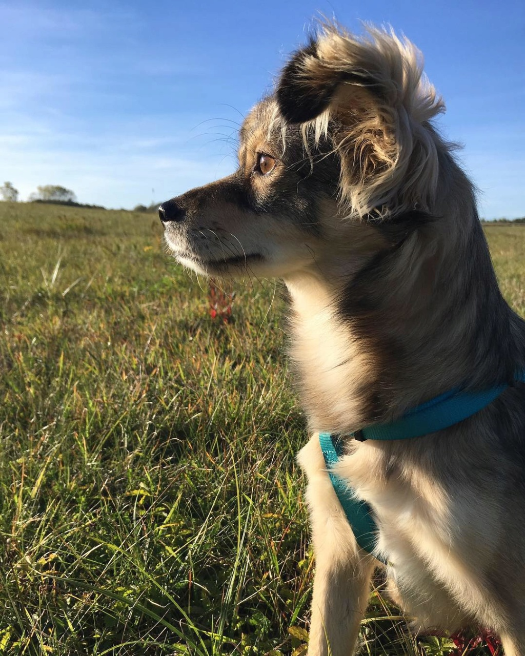 Hinouk - femelle - Târgu Frumos - réservée adoption (57) 44946610