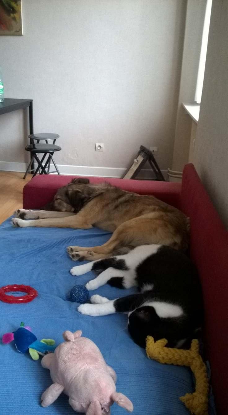 Hizia (Bella chez Rudy) - femelle - chez Rudy (Iasi) - réservée adoption (67) 45228010