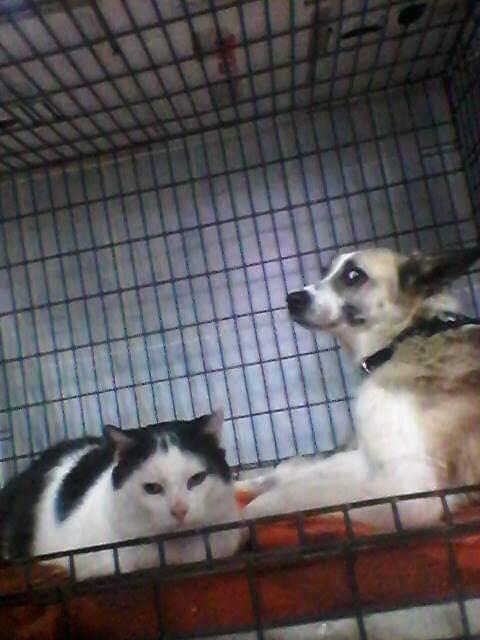 Fetita et Piciu - Arad - à adopter ensemble - réservés adoption ensemble (68) 45337710