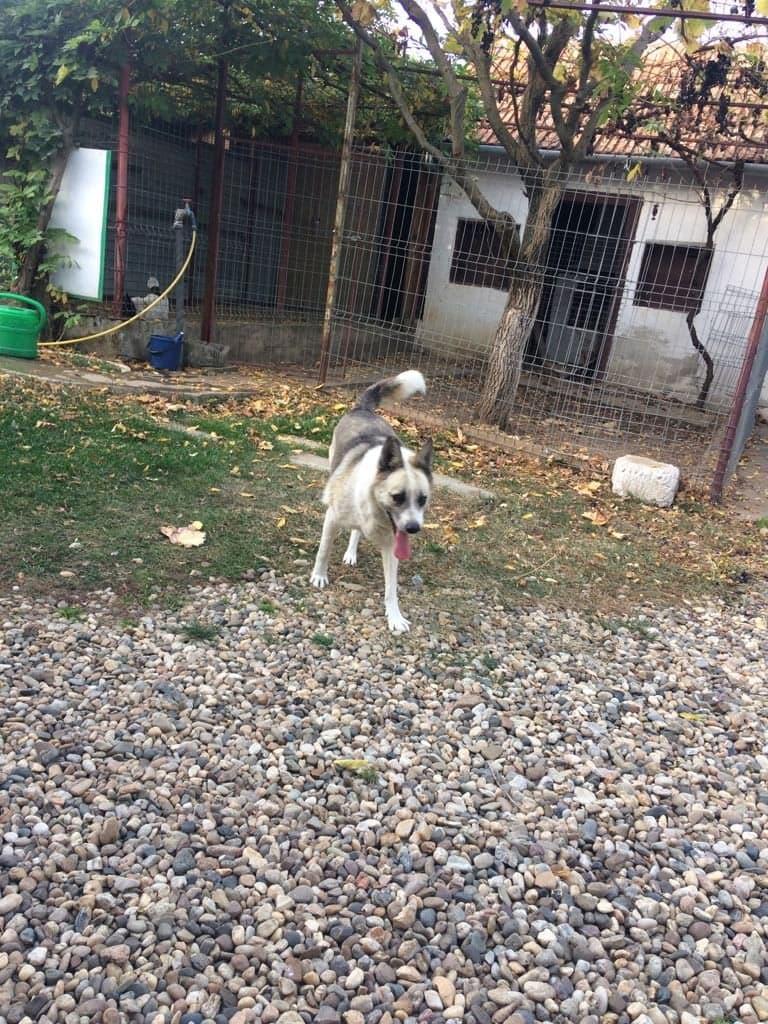 Fetita et Piciu - Arad - à adopter ensemble - réservés adoption ensemble (68) 45359111