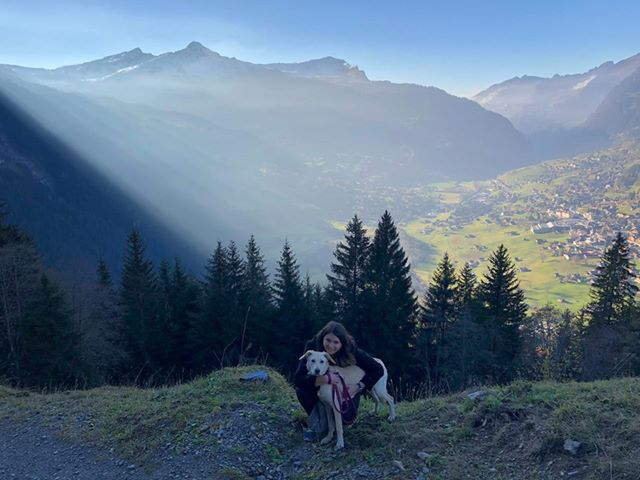 Maya (ex-Labana) - femelle - chez Rudy (Iasi) - réservée adoption (Suisse) 45417010