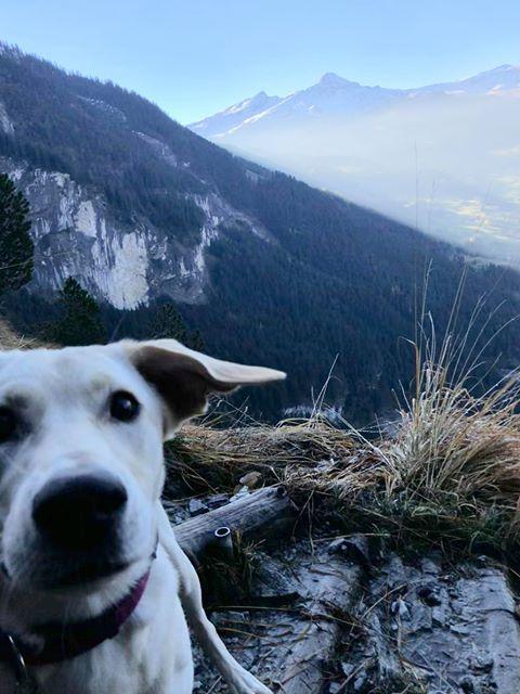 Maya (ex-Labana) - femelle - chez Rudy (Iasi) - réservée adoption (Suisse) 45457310
