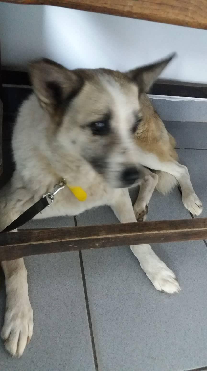 Fetita et Piciu - Arad - à adopter ensemble - réservés adoption ensemble (68) 45688710